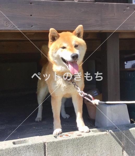 犬 福岡 保護