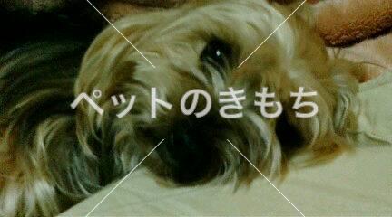 迷い犬の写真