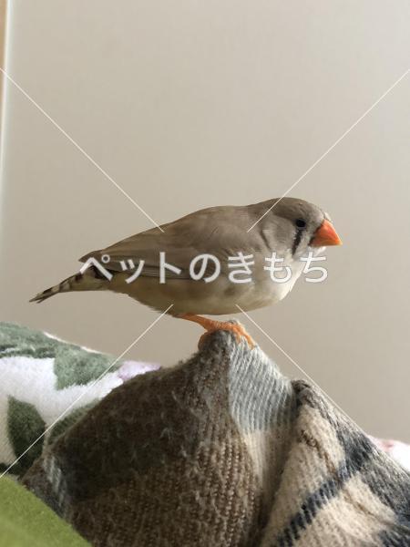 迷い鳥の写真