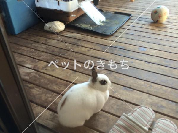 迷子ウサギの写真