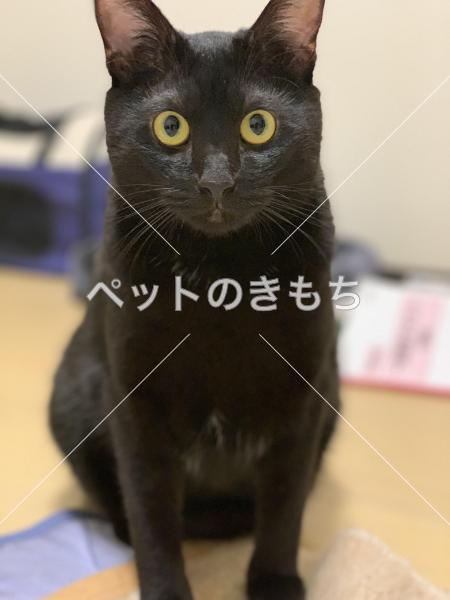 迷い猫の写真