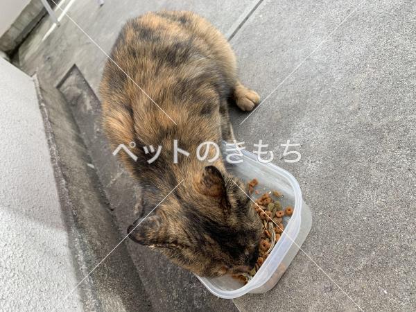 保護猫の写真