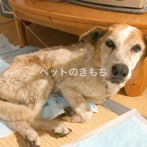 犬 埼玉 保護