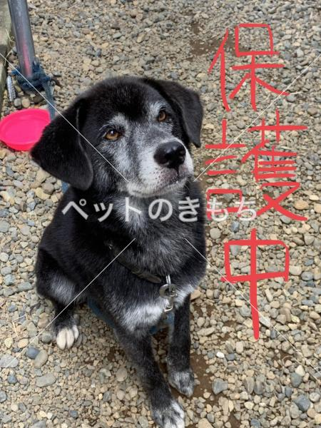 保護犬の写真