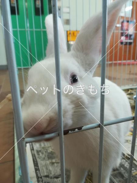 保護ウサギの写真