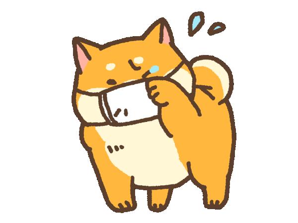 下痢気味の犬