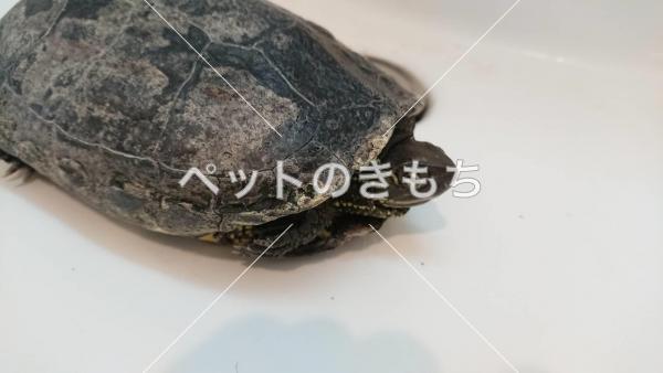 保護カメの写真